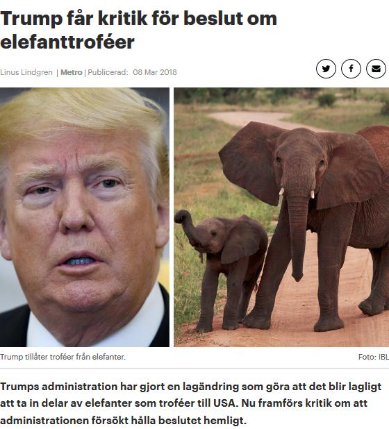 Jakt på elefanter tillåtet igen i Botswana och USA jublar.